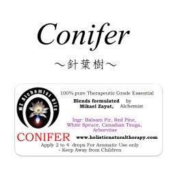 画像1: Conifer-コニファー(針葉樹)-