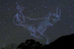 画像1: Capricorn-山羊座-